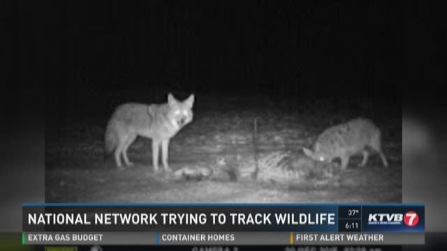 National network trying to track wildlife