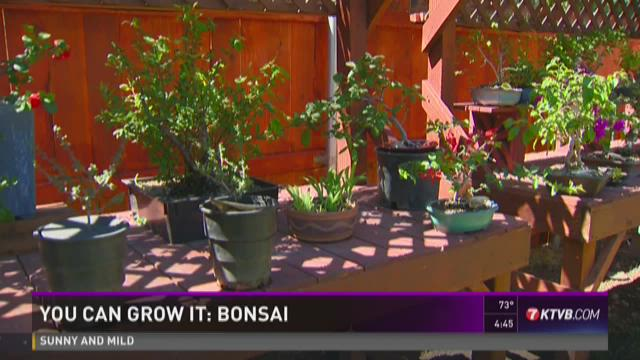 You Can Grow It All About Bonsai Ktvb Com