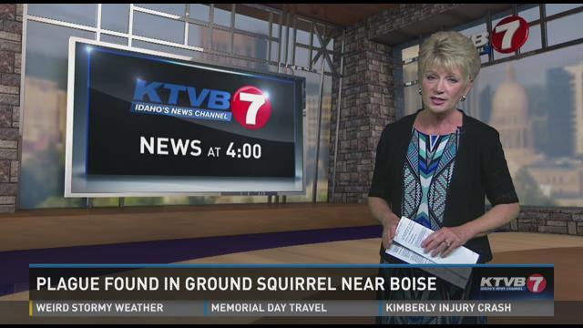 A  ground squirrel