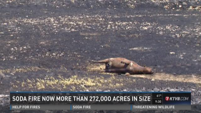 Ranchers devastated by Soda Fire