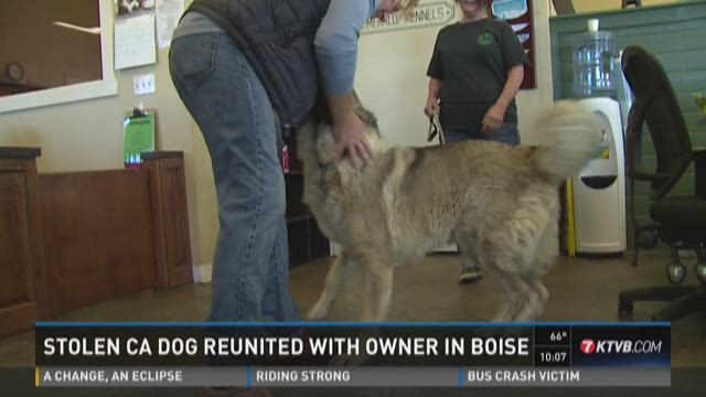Stolen CA dog reunited with owner in Boise