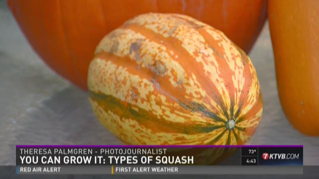 There are many types of squash you can grow in your garden.